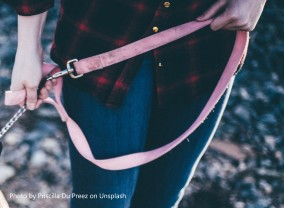 dog lead priscilla-du-preez-234136-unsplash