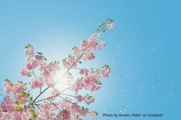 sun and blossom