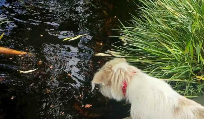 dog watching fish feed