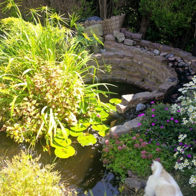 fishpond with plants and waterfall