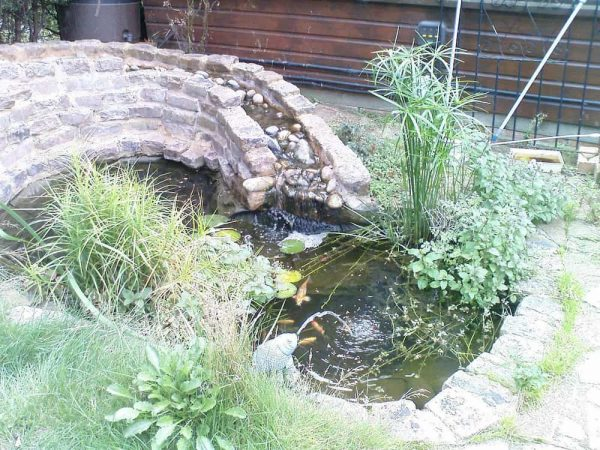picture of pond and waterfall