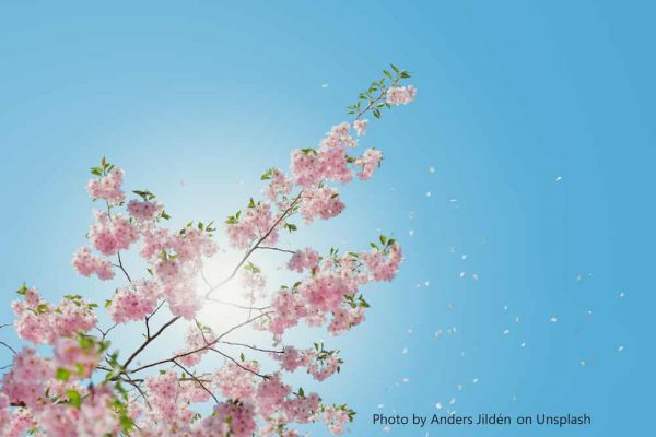 sunny sky with blossom