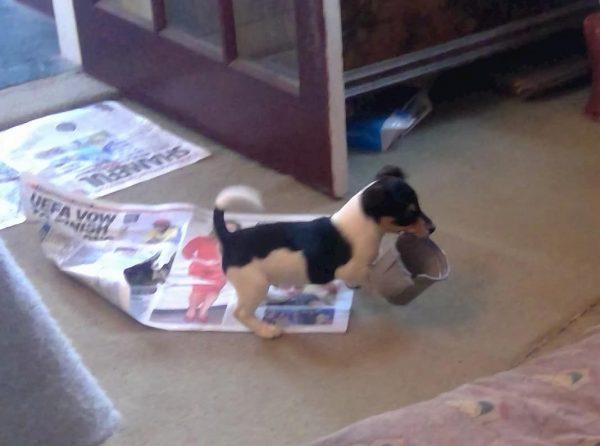 puppy bringing in flowerpot