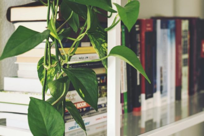 bookshelves with plant